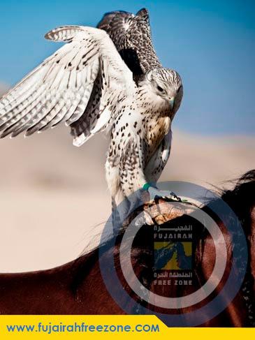 Fujairah Free Zone